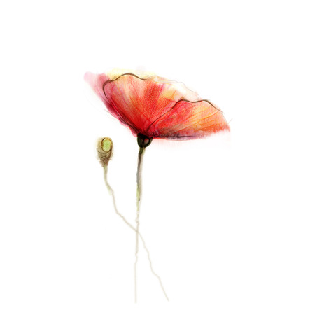 Watercolor painting poppy flower isolated flower on white stock photo watercolor painting poppy flower isolated flower on white background pink and red poppy flower painting hand painted watercolor floral mightylinksfo