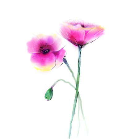 pink flower background: Watercolor painting poppy flower. Isolated flowers on white background. Pink and red poppy flower painting. Hand painted watercolor floral, flower background
