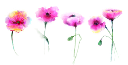 Watercolor painting poppy flower.