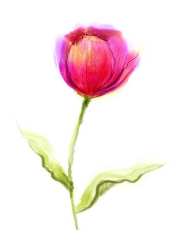 Watercolor painting pink, red tulip flower with green leaves on white paper background. Hand Painted still life of a single flower isolate on white background Stock Photo