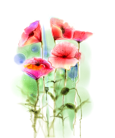 papaver: Watercolor red poppy flowers painting. Flower paint in soft color and blur style, Isolated red poppies on white background. Spring floral seasonal nature background. Watercolor flowers background