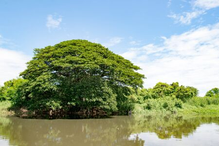 Big Tree River background