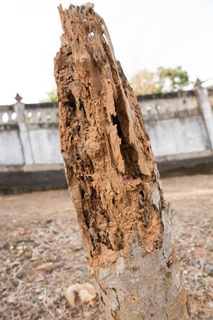damage control: Termites eat wood