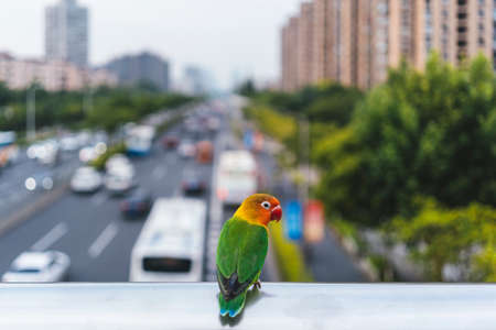 Budgerigar bird is stopping by the bridge on the highway. With the natural beauty of the colors of green feathers, yellow, orange, red and blue. Stockfoto