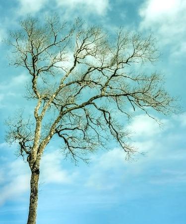 Bäume ohne Blätter am Himmel Standard-Bild - 38965226