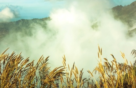 Nebel und Unkraut auf dem Berg, am Morgen schön aussah, ist es phutabberk Berg im Norden von Thailand. Standard-Bild - 42479580