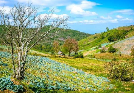 Bauernhaus in den Garten Kohl Standard-Bild - 43271323