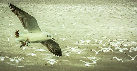 flew: Gulls flying on the beach,It flew alone