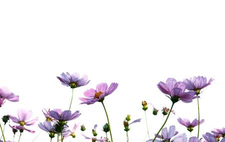 Blumen auf einem weißen Hintergrund Standard-Bild - 82061381