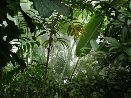 thickets: Tropical Rainforest Stock Photo