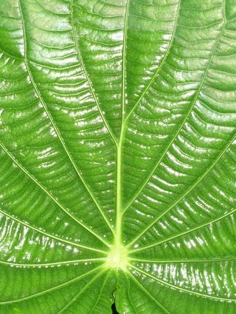 statics: leaf detail