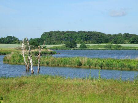 wetland landscape  photo
