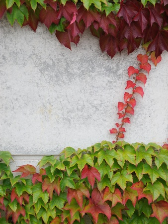 ruby house: autumn leaves and concrete