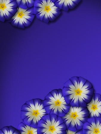 Blue flowers with blue background photo