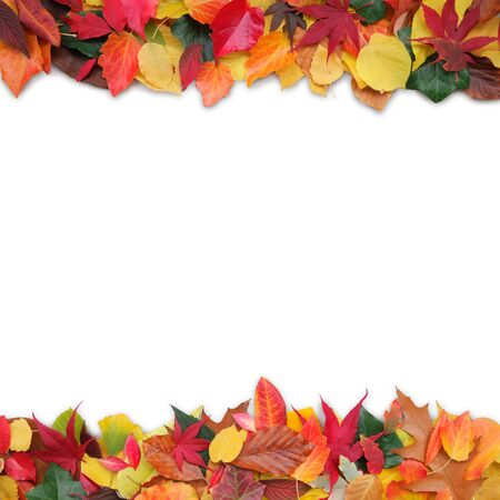 colorful autumn leaves with white background photo