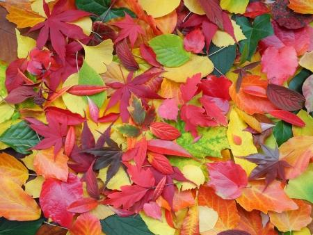 カラフルな秋の葉の背景