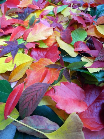 colorful autumn leaves background upright             Stock Photo - 11174223