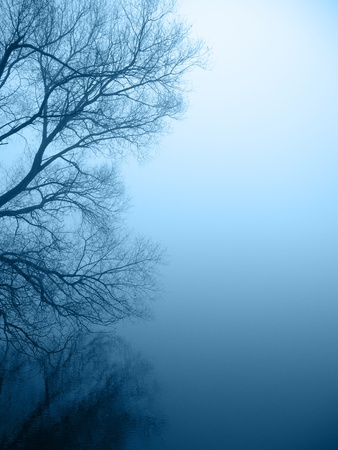 eerie: tree silhouette by the lakeshore Stock Photo