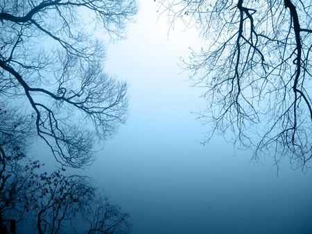 graphical tree silhouette by the lakeshore Stock Photo - 11307815