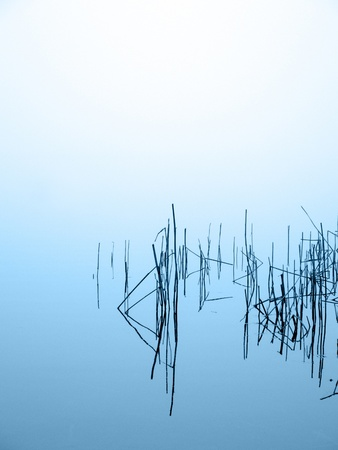 reed in misty lake upright