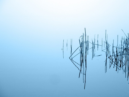 reed in misty lake