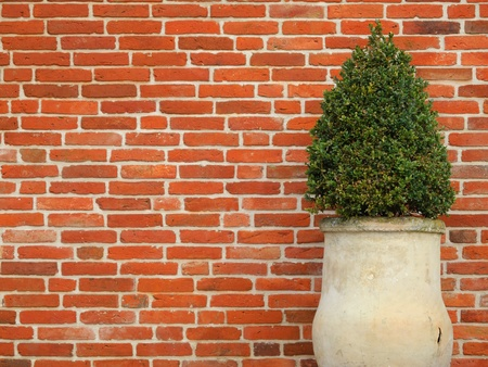 clinker: box in terracotta pot with red clinker wall in the background Stock Photo
