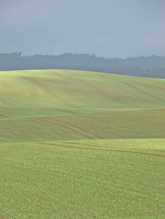 agrarian: beautiful agrarian landscape with waved fields Stock Photo