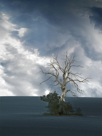 dismal: almost monochrome image with a dead tree an threatening sky Stock Photo