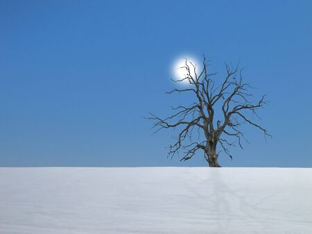 lonesome dead tree in winter in a snowy field photo
