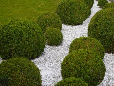 garden detail with box trees and white gravel