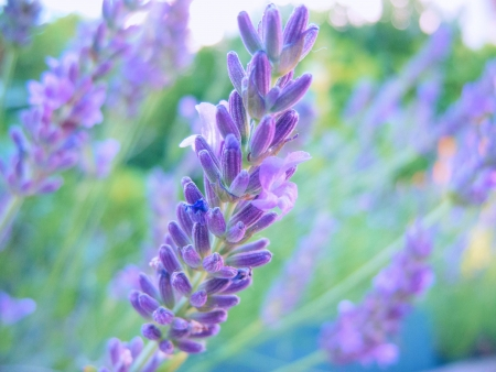 artificial flower: macro shot of a beautiful lavender blossom Stock Photo