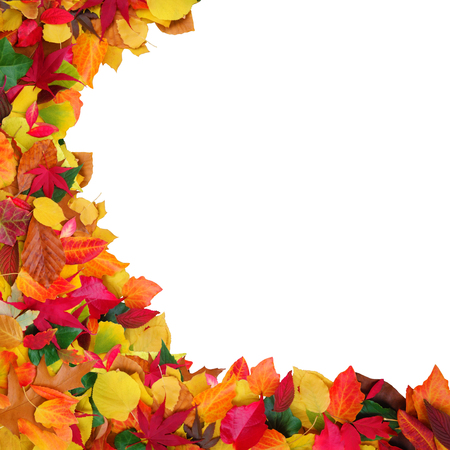 Colorful autumn leaves with white background and copy space photo