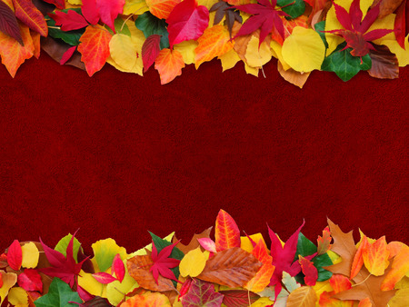 ivy wall: colorful autumn leaves on maroon plaster background