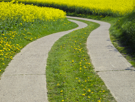 agrarian: curved agrarian track through a canola field Stock Photo