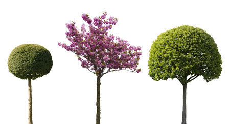 ornamental shrub: three ornamental trees isolated on white background Stock Photo