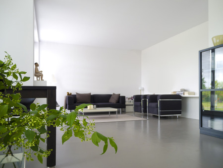 modern private living and dining room with plant in the foreground Foto de archivo