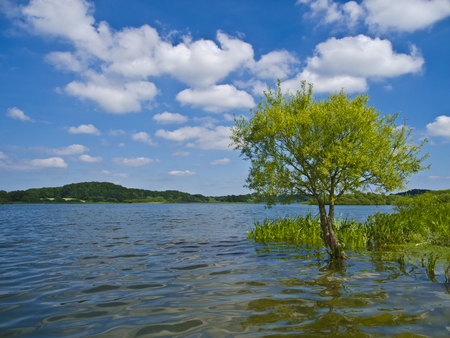 schleswig holstein: a tree standing in the water of a beautiful lake Stock Photo