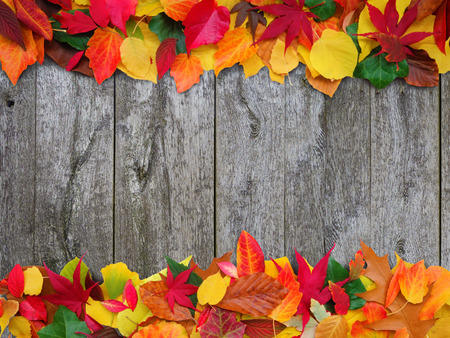 sordid: colorful autumn leaves on old wooden background