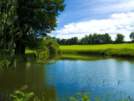 biotope: pond with waterlilies in park landscape Stock Photo