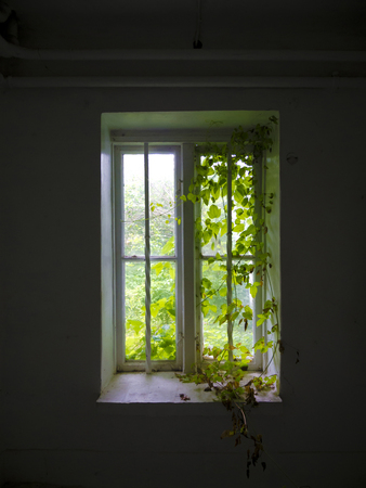 overrun: old overgrown wooden window with metal bars Stock Photo