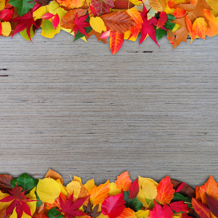 copy sapce: colorful autumn leaves on wooden background