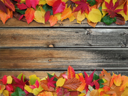 copy sapce: colorful autumn leaves on old weathered wooden background with copy space