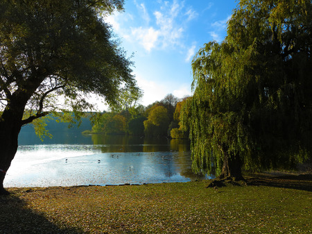 park with lake and willow trees in contre jour sun Stock Photo
