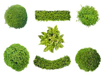 trompo: Conjunto de plantas en vista desde arriba aislados en el fondo blanco para el jardín y la arquitectura del paisaje