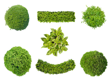 set of plants in top view isolated on white background for garden and landscape architecture