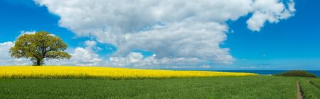 rural panoramic landscape with blooming canola field, a tree and a view to the sea in the background Stock fotó