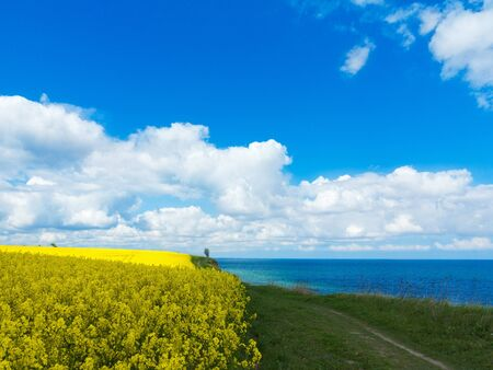 footpath between the steep bank of the baltic sea and a flowering rape field with a view of the sea