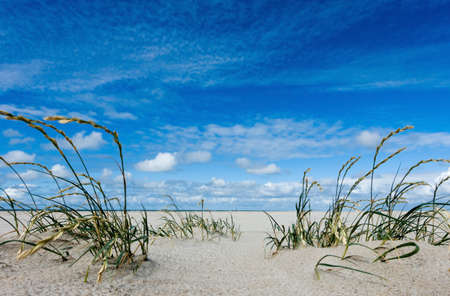 marram grass in the sand at an endless north sea beach in the background Stock fotó - 151724140