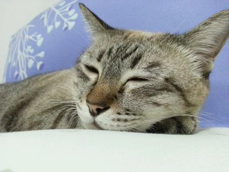 pillows: Sleepy cat