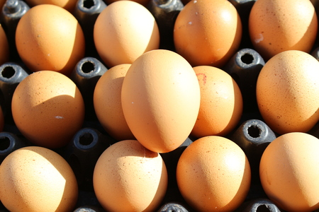 panel: eggs panel